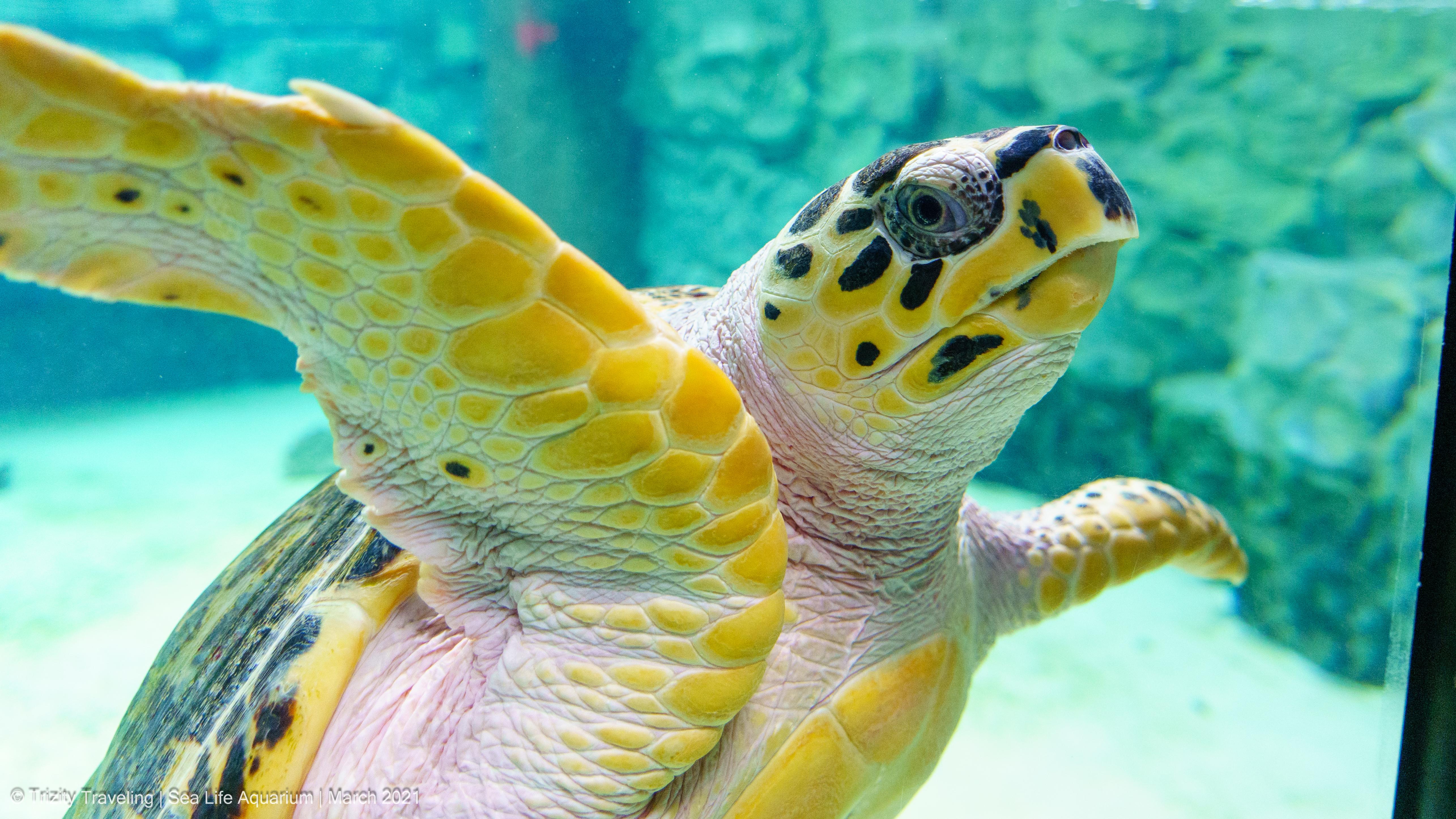 Sea Life Aquarium – Grapevine, Texas